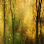 Artscape..........The Light in the Forest by Imi Koetz