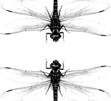 Double Dragonfly Sticker