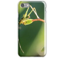 Mr. Cricket Nymph iPhone Case/Skin