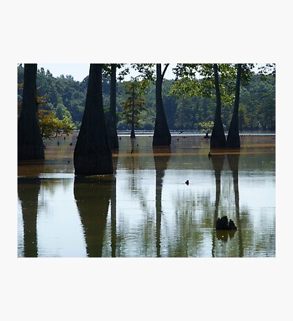 Cypress Reflection Photographic Print