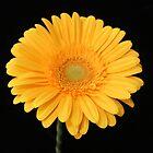 Yellow Flower by fantasytripp