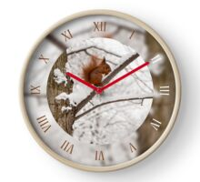 Squirrel sitting on tree  Clock