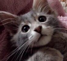 super cute kitten! Sticker