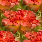 Roses Galore by Judi FitzPatrick