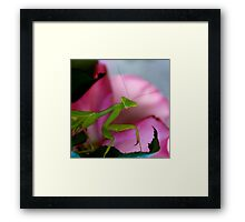 Pretty in Pink Mantis Framed Print