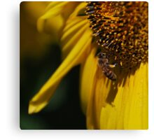 The Bees Knee Canvas Print