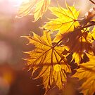 Golden Hour by boxx2genetica