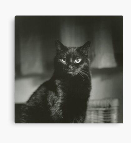 Portrait of black cat square black and white analogue medium format film Hasselblad  photograph Canvas Print