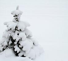 Blanket of Snow by Mark J Seefeldt