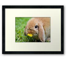 Curious Bunny Framed Print