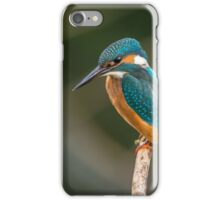 Blue and Orange Bird iPhone Case/Skin