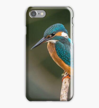 Blue and Orange Bird iPhone Case/Skin