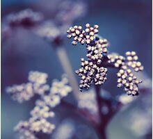Archipelago Flowers Photographic Print