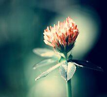 Blood Flower by boxx2genetica
