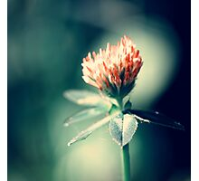 Blood Flower Photographic Print