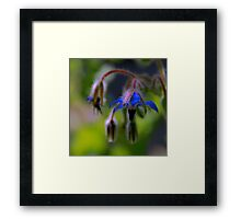 Evening Primrose Framed Print