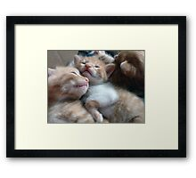 Kittens 3 Framed Print