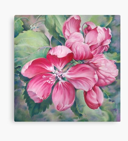 Flower of Crab-apple Canvas Print