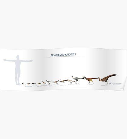 Size of some Alvarezsaurs Poster
