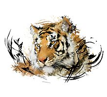 Distant Tiger Photographic Print