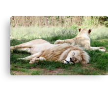 Pair of White Lions Canvas Print