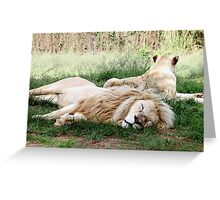Pair of White Lions Greeting Card