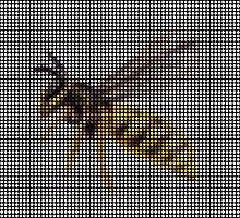 Wasp by Lars Furtwaengler