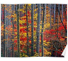 AUTUMN, HARDWOOD FOREST Poster