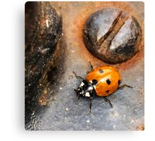 Ladybug, beetle, screw, macro, micro, coccinellidae Canvas Print