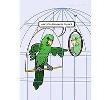 Parrot Cage Fight Photographic Print