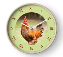 Clock of young Rhode Island Red cock Clock