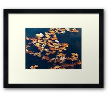 Autumns colored oak leafs upon water Framed Print