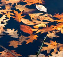 Autumns colored oak leafs upon water Sticker