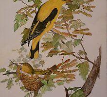 GOLDEN ORIOLES - watercolor by Marilyn Grimble
