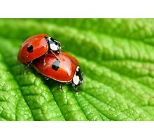 Ladybirds - Increasing the troops Photographic Print