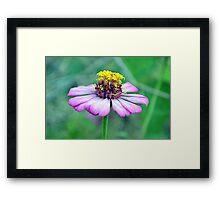 At bloom Framed Print