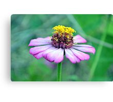 At bloom Canvas Print