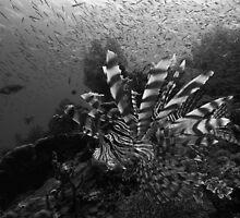 Fish Soup II by James Deverich