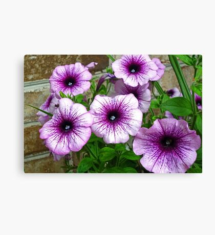 Beautiful Purple and White Flowers Against Brick Canvas Print