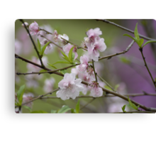Blossoms at Spring Bluff Canvas Print