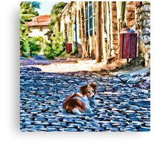 Dog on old small street Canvas Print