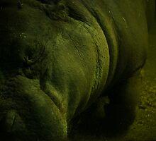 Sleeping Hippopotamus  by Charlotte Pridding
