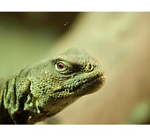 lizzard look Photographic Print