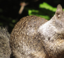 Cute Squirrel Photo and Cell Phone Case Sticker