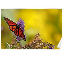 monarch on yellow Poster