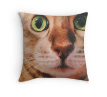 Blueberry the Cat Throw Pillow