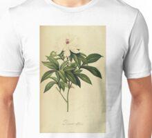 Paeonia Albiflora Unisex T-Shirt