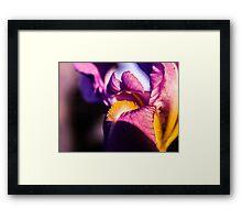 Violet flower closeup Framed Print