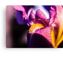 Violet flower closeup Canvas Print