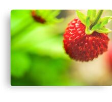 Red berry Metal Print